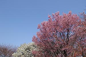 20040328-1.jpg